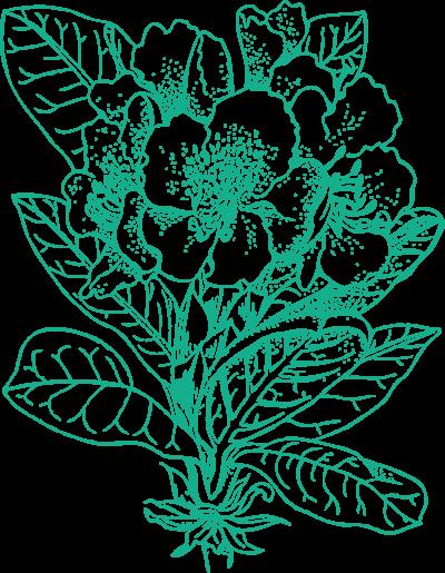Ohlsdorf der Park - Flower icon